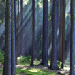 Rays of light in forest - Stock Photo