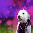 Dog Dressed up on Background - Stock Photo