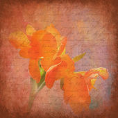 иллюстрация персик ирис — Стоковое фото