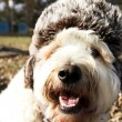 Dog in Ear-Muff Hat — Stock Photo