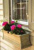 Vintage Flower Box and Flowers — Stock Photo