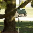 Squirrel in the bird feeder — Stock Photo