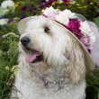 Dog Wearing Floral Sun Hat — Stock Photo #27155885