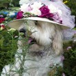 Dog Wearing Floral Sun Hat — Stock Photo
