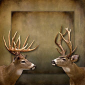 Buck Background Illustration — Stock Photo