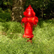 Fire Hydrant in Woods — Stock Photo