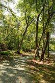 Nature Trails — Stock Photo