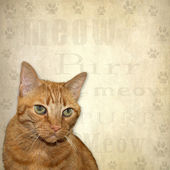 Background of Cat and Text — Stock Photo
