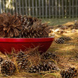 Pine Cone in Red Dish — Stock Photo