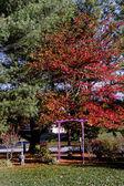 Ağaçları ile burnt orange foiliage Güz — Stok fotoğraf