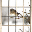 View of Bird Perched on Branch through Window — Stock Photo #39320955