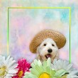 Puppy and Flowers — Stock Photo