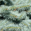 The branches of fir tree — Stock Photo #13210503