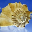 Shell — Stock Photo #13795225
