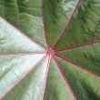 Leaf close-up — Stock Photo