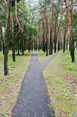 Asphalt walkway in park — Stock Photo