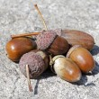 Handful of acorns — Stock Photo