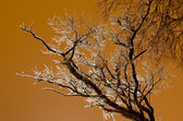 Beautiful icy tree without leaves on golden background — Stock Photo
