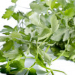 Stock Photo: Food background - green parsley isolated over white