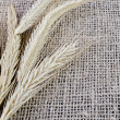 Ears of barley lying on sacking - Stock Photo