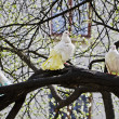 White doves — Stock Photo #27103285