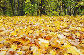 Autumn background composed of leaves — Stock Photo