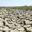 Drought land — Stock Photo #34844147