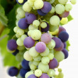 Stock Photo: Motley bunch of grapes