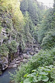 Gorge in the Carpathians — Photo