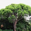 Tropical tree — Stock Photo #36039907