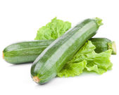Zucchini courgette — Stock Photo