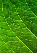 Hoja verde — Foto de Stock