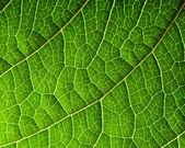Foglia verde — Foto Stock
