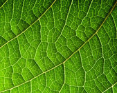 Green leaf — Stock fotografie