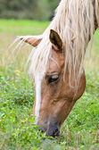 Close-up face of the horse — Stock Photo