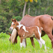 Mare and foal in a meadow — Stock Photo