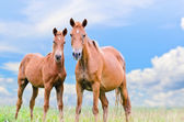 Brown horse and foal looking — Stock Photo