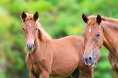 Close up brown horse lookin — Foto Stock