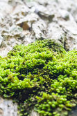 Moss on the tree — Stockfoto