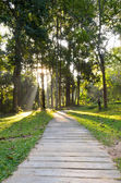 Pathways in tropical forests morning — Stock Photo