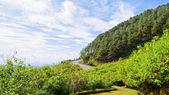 Scenic nature Doi Mae Uko mountain — Foto de Stock