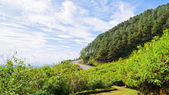 Scenic nature Doi Mae Uko mountain — ストック写真