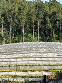 Flower farm on mountain — Stock Photo