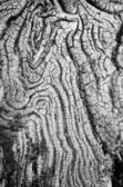 Texture of old wood black and white — Stock Photo