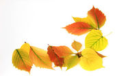 Autumn background of colorful leaves — Stock Photo