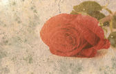 Red rose in grunge style — Stock Photo