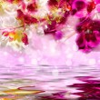 Elegant purple and white orchids over the water — Stock Photo