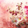 Stock Photo: Pink and white orchids on messy grunge background