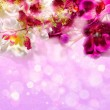 Purple and white orchids on a shiny lilac background — Stock Photo