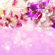 Branch of flowers on a shiny lilac background — Stock Photo